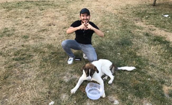 Cumali Özkaya sokak hayvanları için proje başlattı