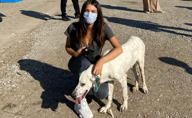 Gizem Güneş Ordu da hayvan barınağını ziyaret etti
