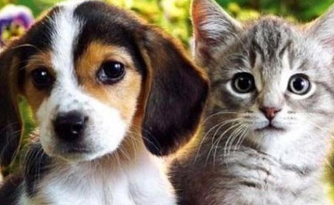 Kedi ve Köpek Sahiplerine evcil hayvanları için pasaport alma zorunluluğu getiriliyor!
