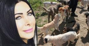 Nuray Hafiftaş'ın 50 kedisi ve 10 köpeği kimsesiz kaldı