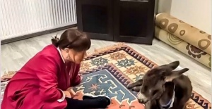 Minik Serçe, Sıpası ile poz verdi!
